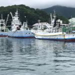 今日の奈屋浦漁港の釣果 | アイゴ・ベラ・アズキマス