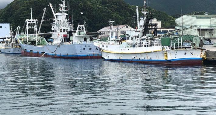 奈屋浦漁港の釣果