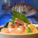 居酒屋 大将 | 津市久居で新鮮な魚が食べられる店