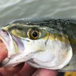 松阪港の釣果 | フカセ釣りでツバスとサバ