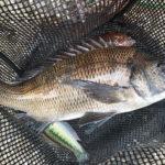 奈屋浦漁港の紀州釣り釣果 | チヌ・サバ・アイゴ・グレ