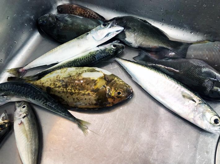 10種類の魚