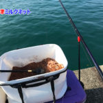 今日も奈屋浦で紀州釣り | 黒鯛と巨大ボラ